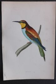 Morris 1870 Antique Bird Print. Bee Eater